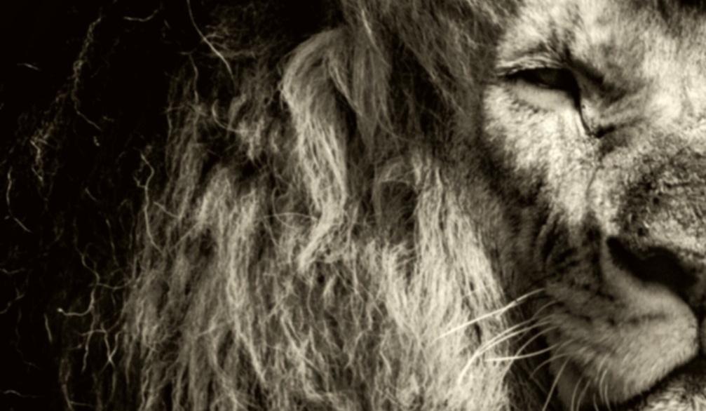 Coronavirus - Comment s'occuper chez soi ? #8 - Opération Bol d'Air avec Luvan, Alex Evans vous offre des epubs, les feuilletons de Loïc Le Borgne et Fabien Clavel, une opé du Chat Noir...